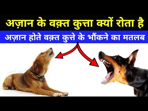 अज़ान के वक़्त कुत्ता क्यों रोता है ? - Why Dogs Barking During Azan In HIndi ?