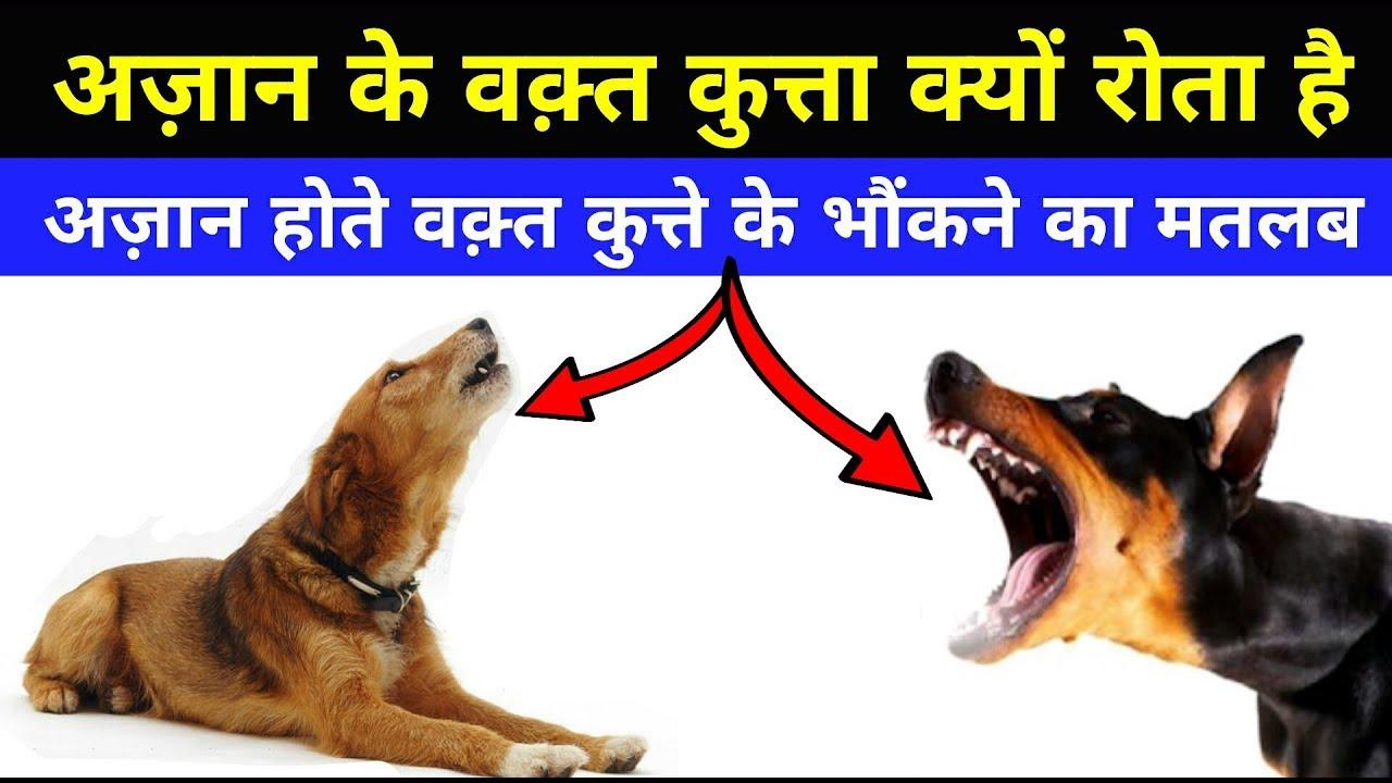 Image result for कुत्ते के रोने के पीछे छुपा होता है बहुत बड़ा रहस्य