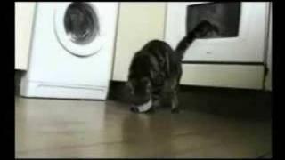 Jaja, die Katzen