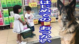 grandchild and German Shepherd dog 子供達とシェパード犬のおつかい ...