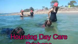 Beach Buddies Playground With Hound Dog Day Care Brisbane 10 9