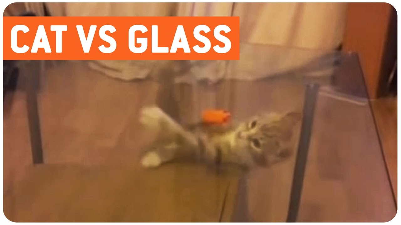 Confused Kitty | Cat vs. Glass