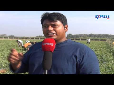 Ideal Young farmer in Modern Agriculture || Paadi Pantalu - Express TV