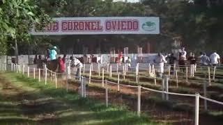 COLORADITO - Previa GP Paraguay Futurity - Jockey Club Coronel Oviedo - 21/03/2019.