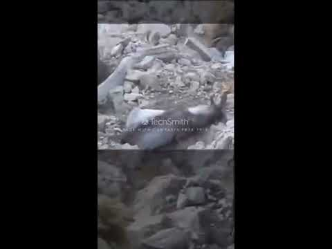 markhor hunting chilten and takatu quetta youtube