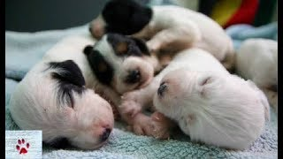newborn-puppies-and-their-stray-mum-rescued-and-look-at-them-now