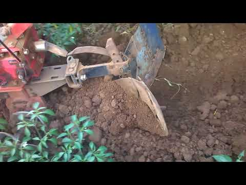 Plough attached to Power weeder for chilly final intercultivation