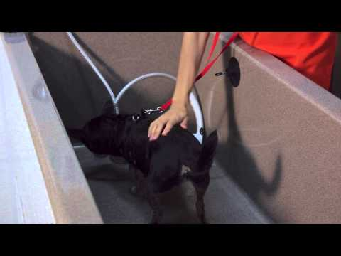 Dog Bath Games : Dog Tips & Tricks