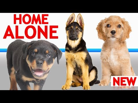 if-your-dog-gets-lonely-while-you're-away,-this-can-help!