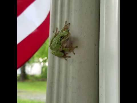 Frogged!!!