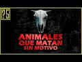 watch he video of Top 5 Animales que Matan por Placer o sin Motivo aparte del Ser Humano