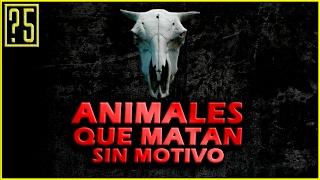 Top 5 Animales que Matan por Placer o sin Motivo aparte del Ser Humano