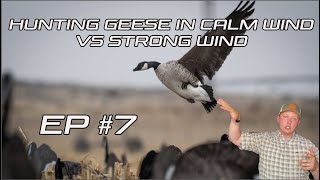 HUNTING GEESE In Calm Wind VS. Strong Wind??? Field Facts With Forrest Episode 7