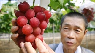 Fancy Japanese Grapes Sell For $5,400