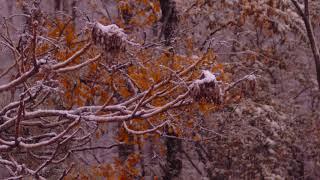 Composition, Color, Snow Slowmotion  1