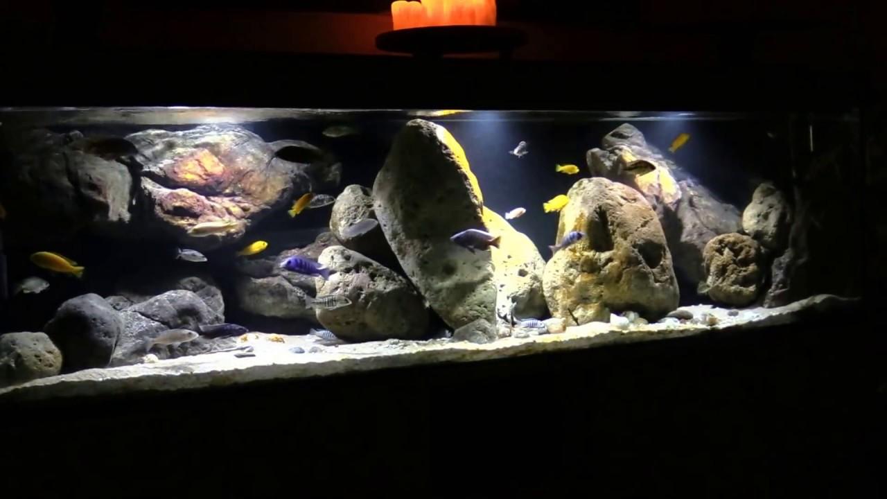 malawisee aquarium impressionen eines beckens youtube. Black Bedroom Furniture Sets. Home Design Ideas