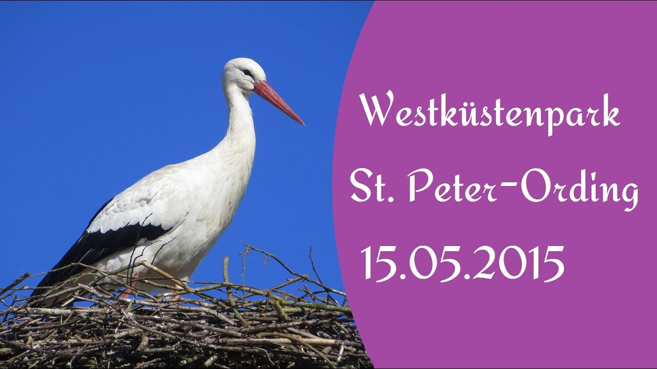 Westküstenpark St Peter Ording 15052015 Youtube