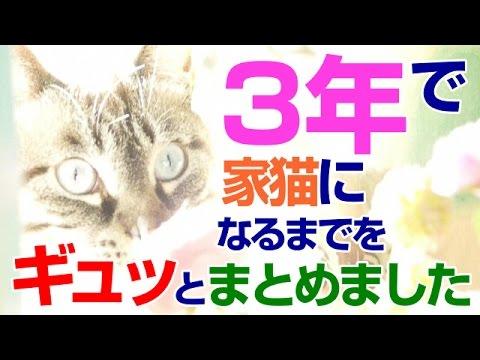 【Jean 395】凶暴な保護猫ジャンくんの3年間をギュッとまとめました #元野良猫 #保護猫