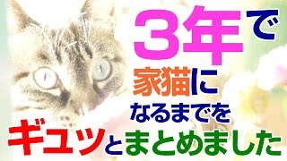 【Jean 395】凶暴な保護猫ジャンくんの3年間をギュッとまとめました 元野良猫の保護里親記録  Jean, a former stray cat.