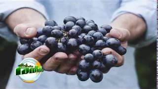 Grape Farming in kerala