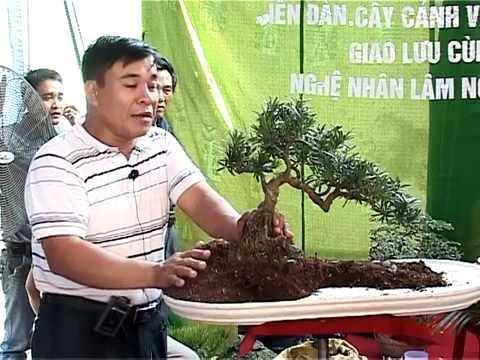 Nghệ nhân LNVinh hướng dẫn kỹ thuật tạo hình Bonsai- P11/16- www.huongsacdatviet.com - alomua.vn