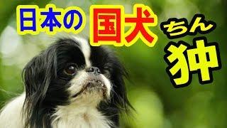 チャンネル登録お願いします ⇒http://sokoooe.com/ok/gd/qcw2hwyy 【海...