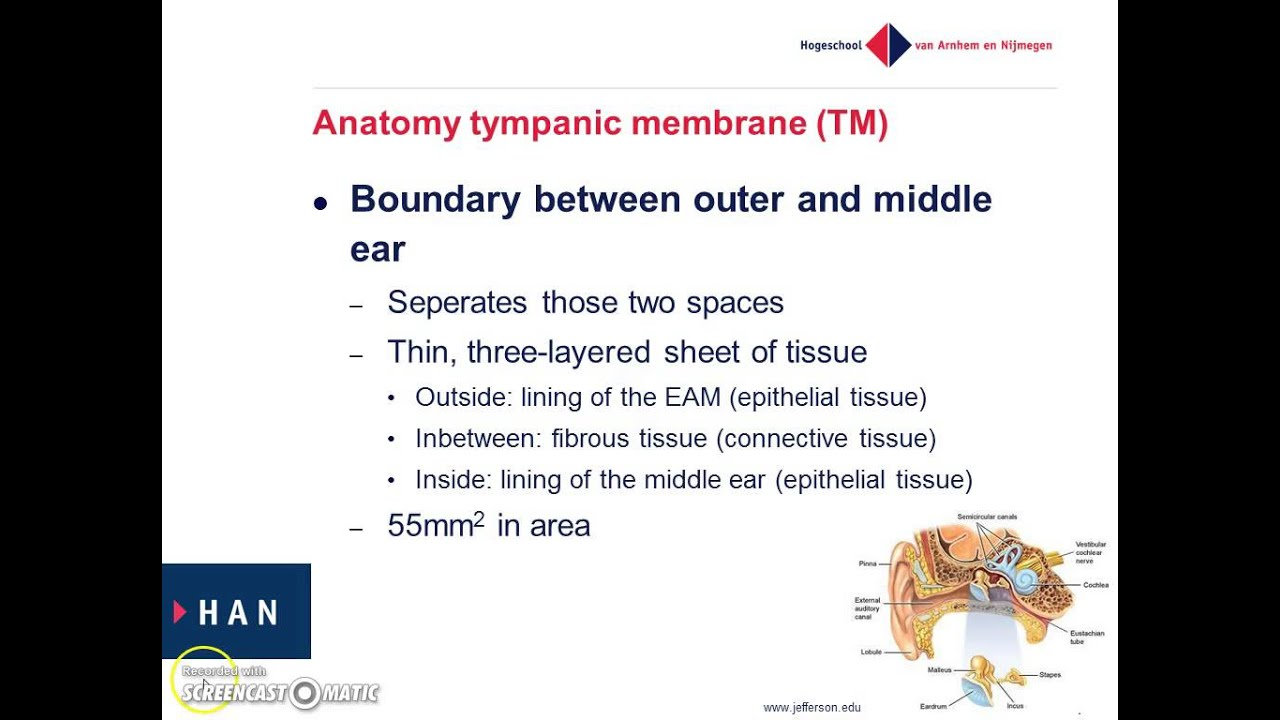 Anatomy and physiology of the outer ear - YouTube
