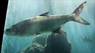 Tarpon Springs Aquarium, Florida - Nov 2012
