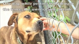An emotional and inspiring dog rescue story