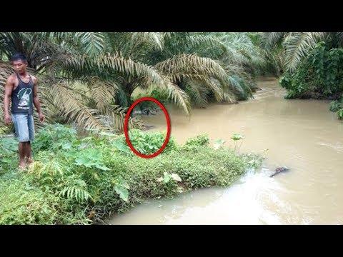 NEKAT !! Pria ini Coba Bersiul Di Sungai Kalimantan, Tiba² Dari Sungai Muncul Sosok Makhluk Besar! thumbnail