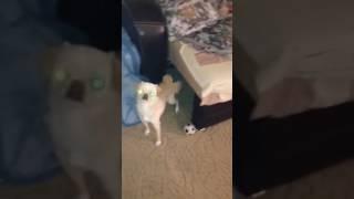 Собака может всё, Тюмень!