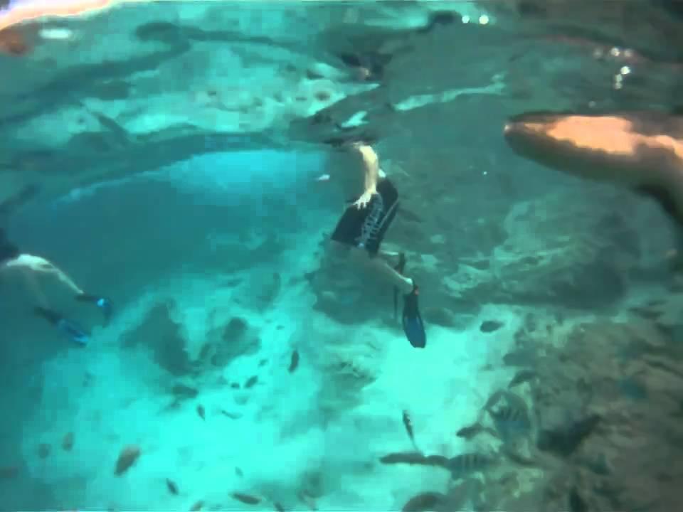 St. Thomas snorkeling at Coki beach - YouTube
