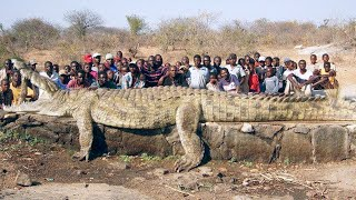 15 Abnormally Large Animals That Actually Exist