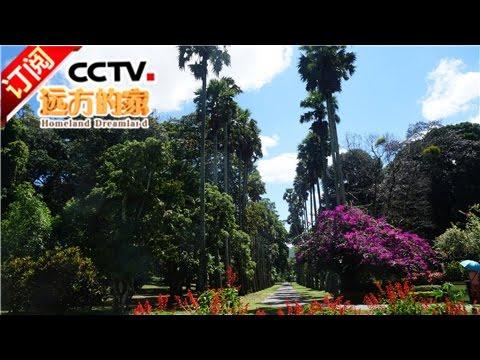 《远方的家》 20170320 一带一路(120)斯里兰卡 古城茶香 | CCTV-4