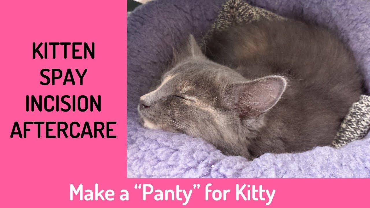 Make A Panty For Kitten Spay Incision Aftercare No Sew Project Youtube