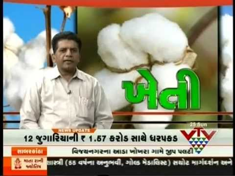 Cotton Disease Pests Control - Israel Agro Consultant