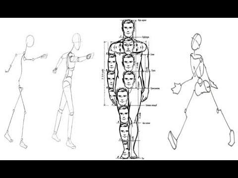 رسم الانسان بالنسب الصحيحة Youtube