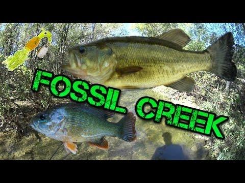 Fossil Creek: Beautiful Sunfish, GIANT Creek Bass, and a fish tank!