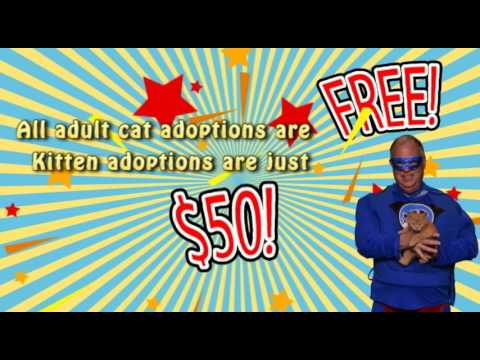 Regina Humane Society - Super Steve's Super Cat and Kitten Adoption Event!