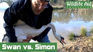 Angry Swan challenges Simon Cowell to 'Round Two'!