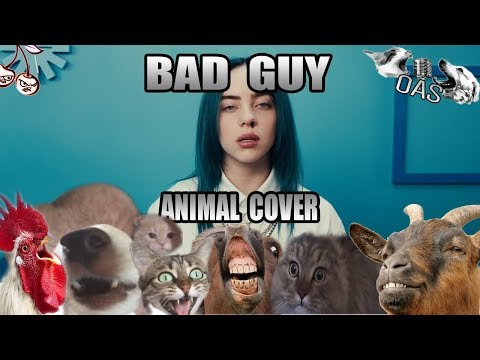 Billie Eilish - Bad Cat (Animal Cover) [Only_Animal_Sounds]