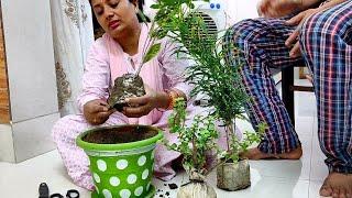 Simple Friday vlog and my Special Shopping - Anupama Jha vlogs