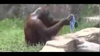 Ржачные приколы с животными