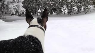 Loki - Dashing Through The Snow