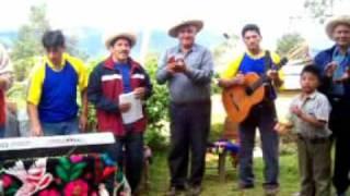 PICAFLOR ANDINO (Chola mentirosa) CHILAL - TONGOD