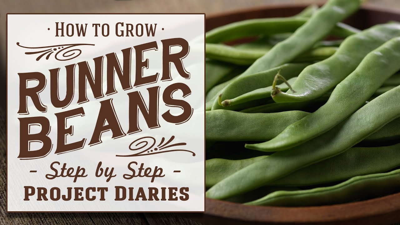 ★ How to: Grow Runner Beans from Seed (A Complete Step by Step Guide)