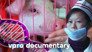 How DNA dreams become reality at BGI in China - Docu