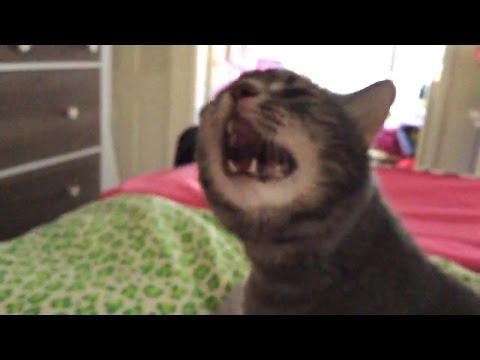 Если кошка чихает и сопли что делать