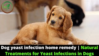 ✅ Dog Yeast Infection Home Remedy    Natural Treatments For Yeast Infections In Dogs    Itchy Dog