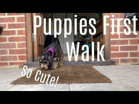 Puppies First Walk | So Cute!